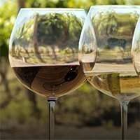 Great Wine: How to Understand and Enjoy the World's 10 Best Wine Varietals-0